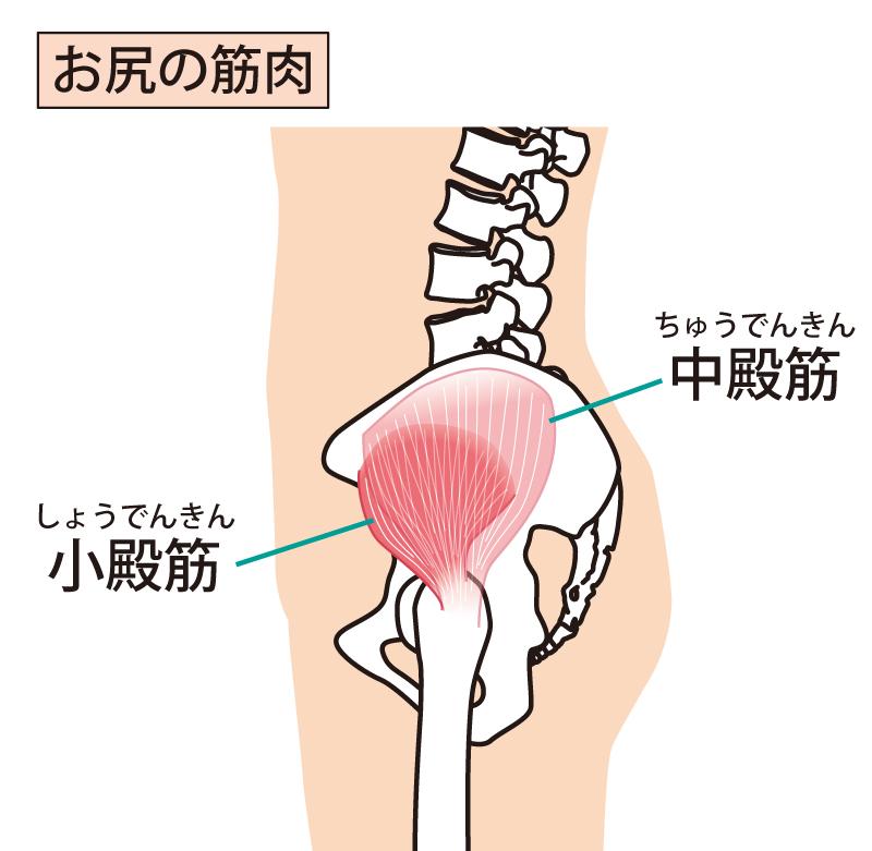 臀部筋の解説図