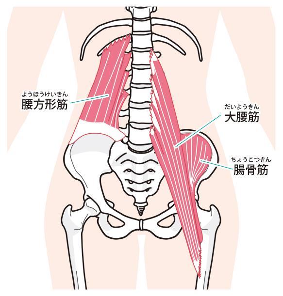 腸骨筋の解説図